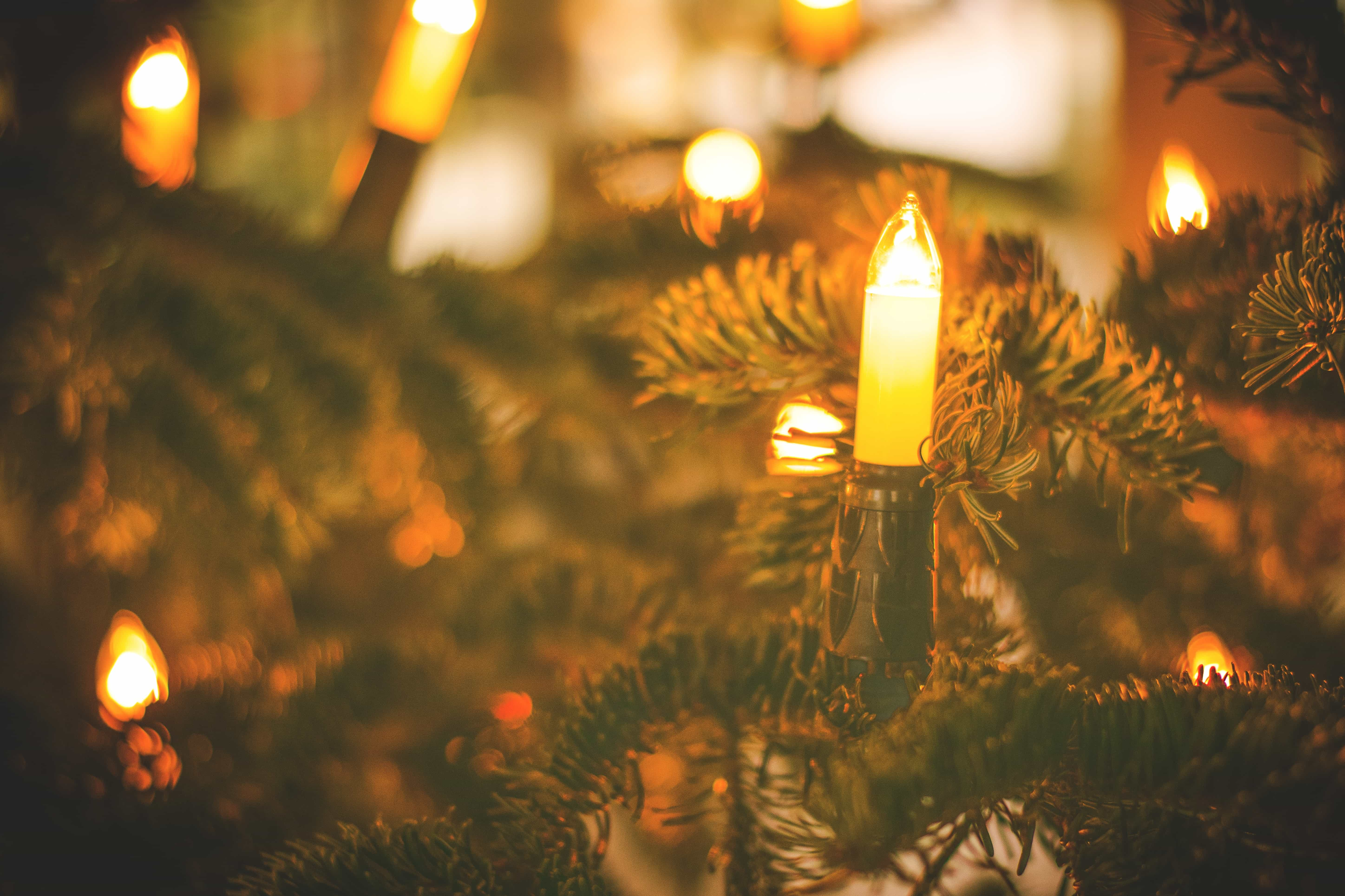 How To Recycle Christmas Tree Lights This Holiday Season Greencitizen